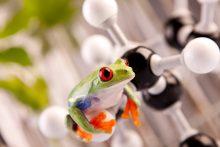 Green Frog sitting on molecules